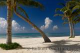 276 Palm trees 4.jpg