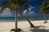276 Palm trees 5.jpg