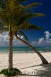 276 Palm trees 6.jpg