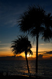 276 Palm trees 8.jpg