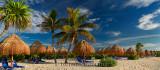 276 Palm trees 10.jpg