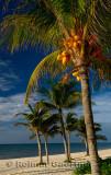 276 Palm trees 11.jpg