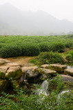 Misty hills and stream at the West Lake Xi Hu plantation in Hangzhou China