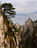 Pine trees on Beginning to Believe Peak with Stalagmite Gang at Yellow Mountain Huangshan China