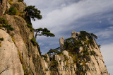 Pine trees growing on rock of Beginning to Believe Peak at Yellow Mountain Huangshan China