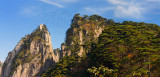 Pine trees and birds flying around Beginning to Believe Peak at Yellow Mountain Huangshan China