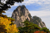 Pine trees and yellow Fall leaves at Fairy Maiden Peak on Huangshan Mountain China