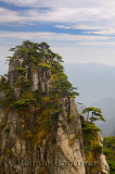 Pine trees growing on Stalagmite Peak on Yellow Mountain Huangshan China