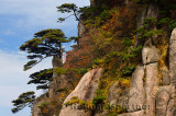 Pines on cliff of Beginning to Believe Peak with Fall foliage Mount Huangshan China