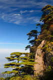 Pine trees overlooking valley at Beginning to Believe Peak Yellow Mountain Huangshan China