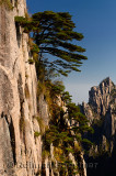 Pine trees on cliff face of Beginning to Believe Peak with Stalagmite Gang at Mount Huangshan China