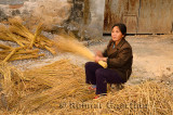 Chinese woman gathering rice straw for broom making in Hongcun China