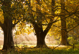 Golden sunlight