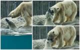 polarbears Vicks & mum (jun12)