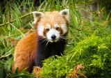 small panda (jun12)