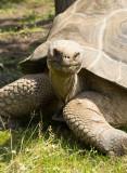 turtle (jun12)