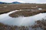 Chapter 5 Picks - Coastal Wetlands