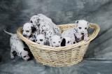 Puppies-8.jpg