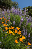 Chap. 8-14, Wild Flowers-8