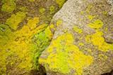 Hues of Lichen - Acadia