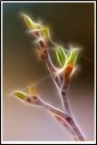 PICT5893 fractal.jpg