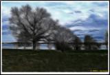 PICT6401.jpg