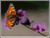 Butterfly 3-2.jpg