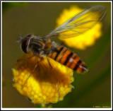 Flie 2.jpg