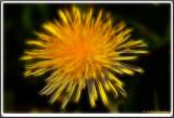 PICT6589 enh 1 2.jpg