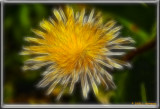 PICT6589 enh 1.jpg