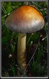 Fungus 4 3.jpg