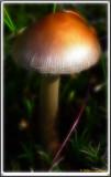 Fungus 4 4.jpg