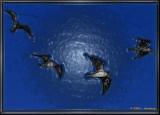 Ghost gulls 1.jpg