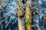 branches givrées