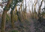 stunted trees