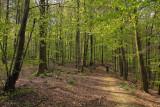 la forêt de La Petite Pierre