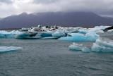 Jökulsárlón, floating icebergs