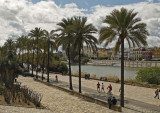 along the river guadalquivir