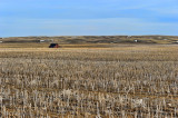 Spring  Wood Mountian SK.