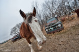 Walter The Clydesdale