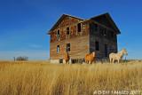 Robsart Saskatchewan
