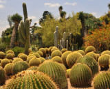 Group of round cacti