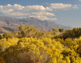 Fall Color in Eastern Sierras; late October 2011.