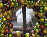 As seen through window with bulbs is a white plant