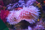 A lovely sea anemone!