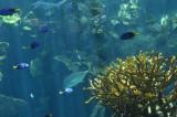 Fish around the coral
