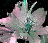 Manipulated real flower.