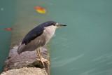 birds_of_victoria_harbour