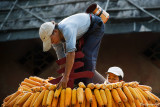 Ethnic Cultural Park.Harvest of the Corn I