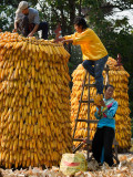 Ethnic Cultural Park.Harvest of the Corn V